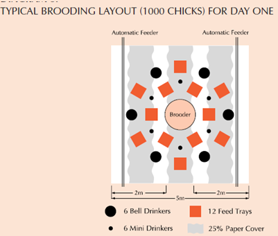 [Image: Brooder-House-Layout.png]