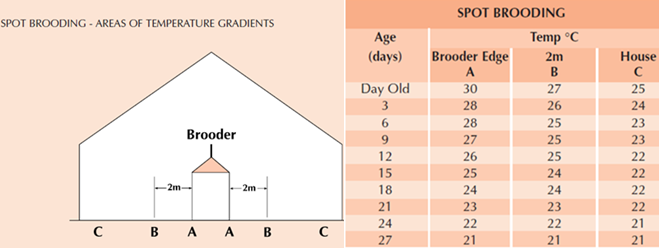 [Image: Brooder-Temperature-and-temperature-gradient.png]