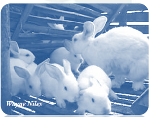 [Image: FarmersJoint-Rabbit-Ebook.png]